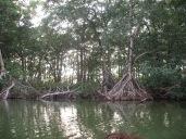 Laguna de los micos, Tela