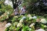 Bosque de hortensias