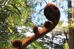 """""""Cola de mono"""", una de las plantes"""