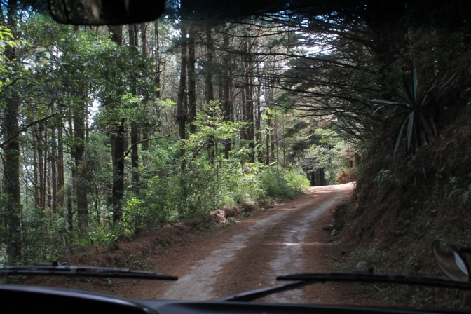 Parque Nacional Montecristo, ¡imperdible! ¡mágico! ¡único!