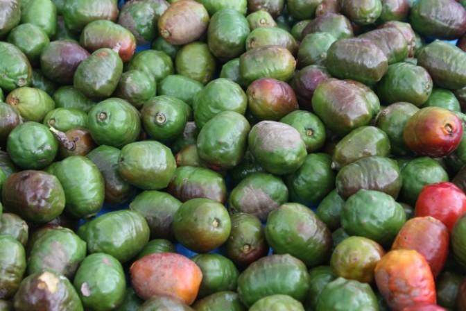 Comida típica y clima fresco: las claves para disfrutar del Festival del Jocote Corona en Cerro Verde