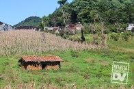 Cultivos en Miramundo.