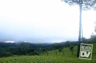Campo de coliflores en Miramundo.